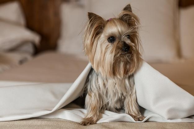 Lustiger hund sitzt auf dem bett