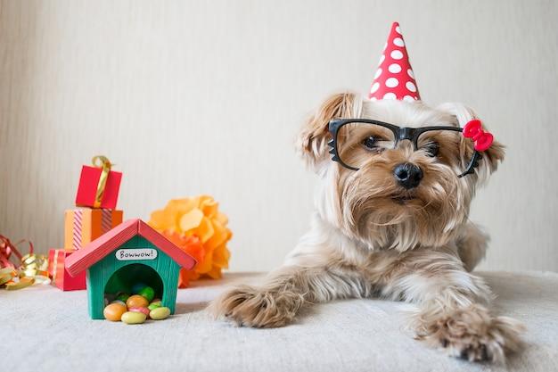 Lustiger netter hund yorkshires terrier (yorkie) in den gläsern auf festlichem hintergrund