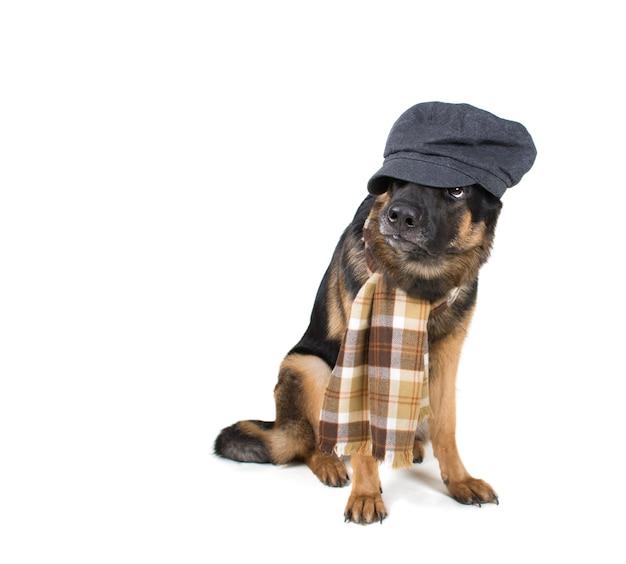 Lustiger niedlicher hund, der eine flache kappe und einen schal trägt