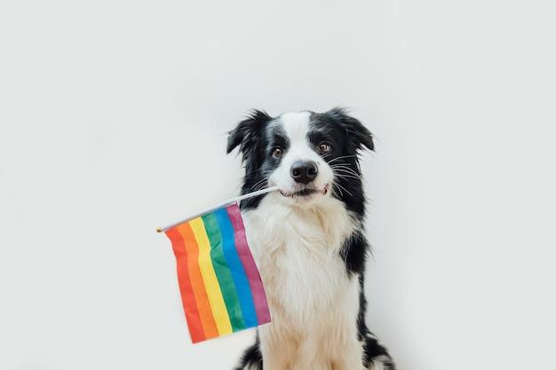 Lustiger niedlicher welpenhunde-grenzcollie, der lgbt-regenbogenfahne im mund lokalisiert auf weiß hält