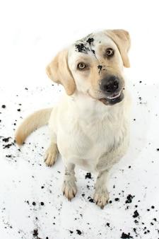 Lustiger schmutziger hund nach spiel in einem schlamm-puddel.