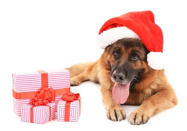 Lustiger süßer hund in weihnachtsmütze mit geschenken isoliert auf weiß
