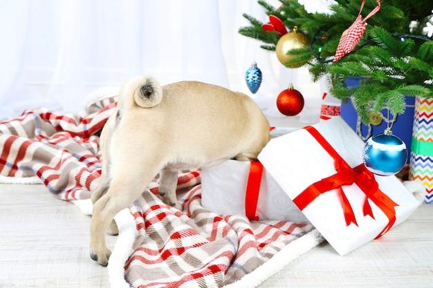 Lustiger, süßer und verspielter mopshund auf weißem teppich in der nähe des weihnachtsbaums