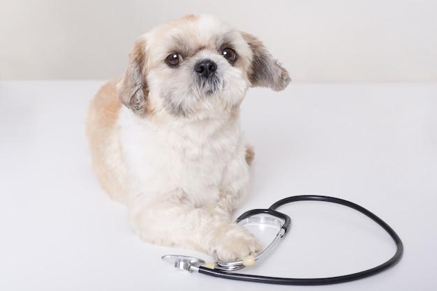 Lustiger tierarzthund, der isoliert liegt