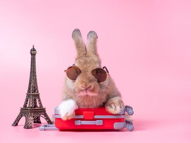 Lustiges braunes babykaninchen, das sonnenbrille und das rote gepäck trägt und in den urlaub fährt. reisekonzept auf rosa wand.