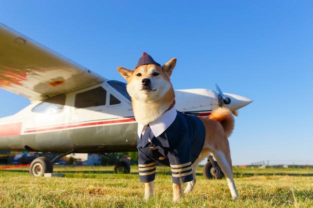 Lustiges foto des akita inu hundes