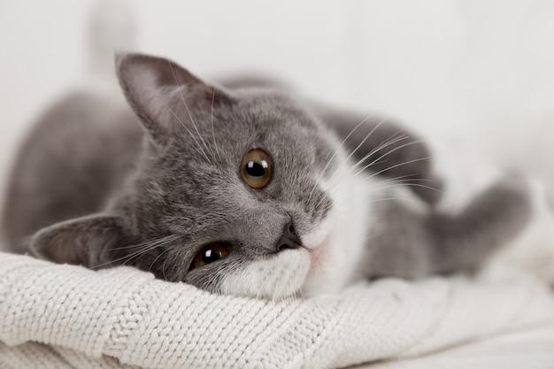 Lustiges graues kätzchen auf einem weißen gestrickten plaid. schön wird gespielt und ausgeruht.