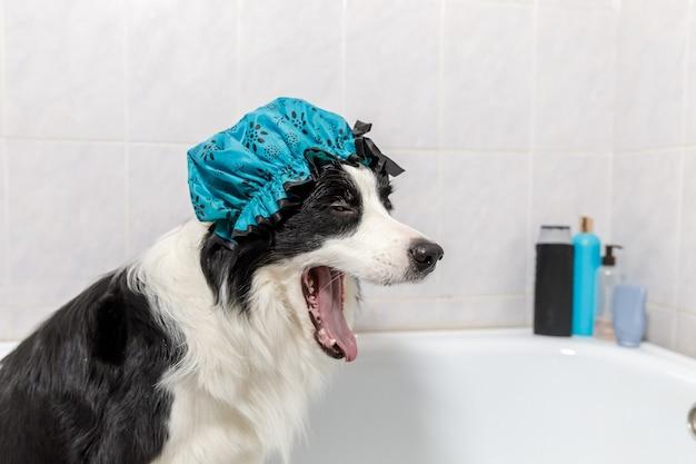 Lustiges innenporträt des welpenhunde-grenzcollies, der im bad sitzt, erhält schaumbad, das duschhaube trägt