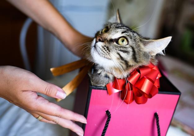 Lustiges kätzchen im rosa geschenk. weibliche hände halten eine geschenkbox, in der ein kätzchen mit einer roten schleife sitzt. geschenkkonzept annehmen