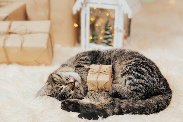 Lustiges kätzchen schläft mit kleiner geschenkbox