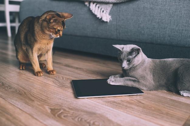 Lustiges kätzchen zwei, das am tablettenschirm aufpasst