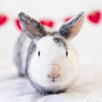 Lustiges kaninchen auf bettlaken