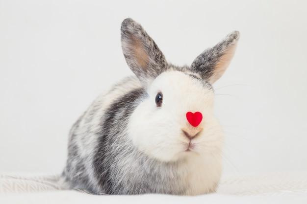 Lustiges kaninchen mit dekorativem rotem herzen auf nase