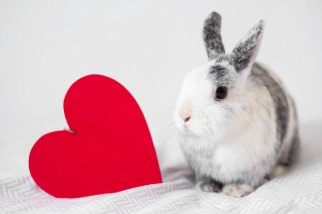 Lustiges kaninchen nahe dekorativem herzen