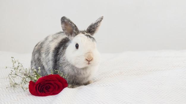 Lustiges kaninchen nahe frischer blume