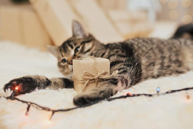 Lustiges kleines kätzchen mit kleiner geschenkbox.