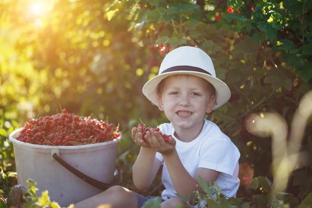 Lustiges kleinkind, das rote johannisbeeren vom johannisbeerbusch in einem garten aufhebt.