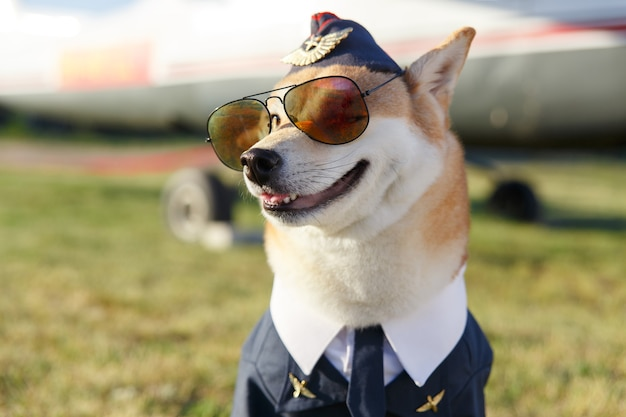 Lustiges nahaufnahmefoto des shiba inu-hundes in einem pilotenanzug auf dem grashintergrund