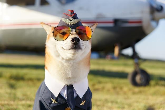 Lustiges nahaufnahmefoto eines lächelnden shiba inu-hundes in einem pilotenanzug in der nähe des flugzeugs