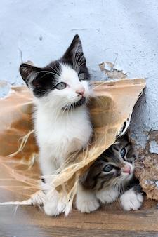 Lustiges obdachloses spielerisches kätzchen zwei