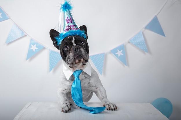 Lustiges porträt der niedlichen französischen bulldogge mit geburtstagshut und blauer krawatte über weiß