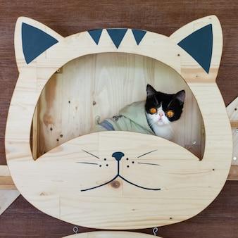 Lustiges porträt der schwarzweiss-katze schauend mit lustigem gefühlgesicht auf dem katzengesichtsregal.