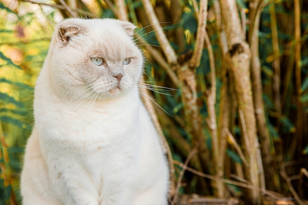 Lustiges porträt des kurzhaarigen heimischen weißen kätzchens