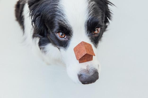 Lustiges porträt des niedlichen welpenhunde-grenzcollies, der miniaturspielzeugmodellhaus auf nase hält