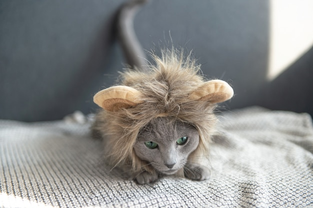 Lustiges spielerisches kätzchen in der löwemaske, die auf bett liegt