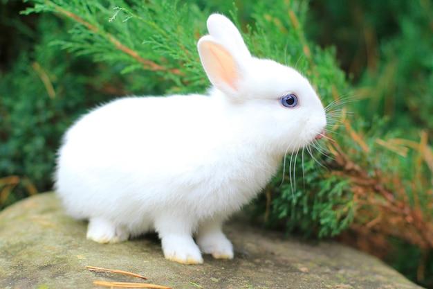 Lustiges süßes weißes kaninchen mit blauen augen. foto eines pelzigen haustieres.