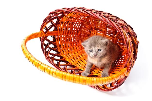 Lustiges verspieltes kleines kätzchen im korb lokalisiert