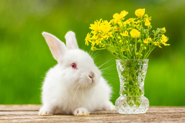 Lustiges weißohriges kleines kaninchen auf einem holz mit einem blumenstrauß an einem sonnigen tag in der natur