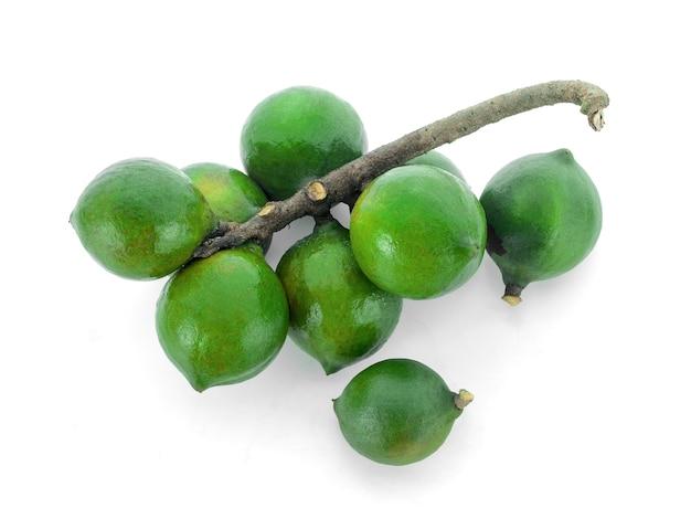 Macadamia-nüsse auf weißem hintergrund.