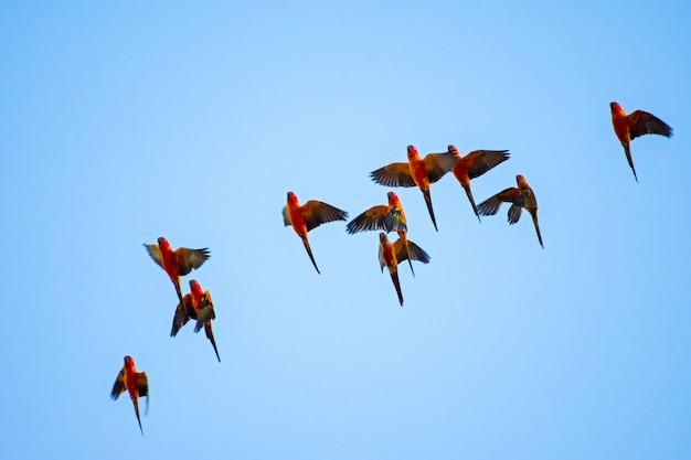 Macaw mit hintergrund des blauen himmels.