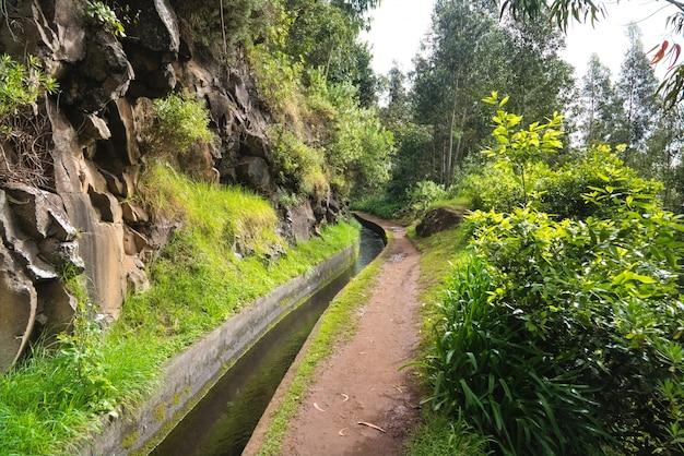 Madeira insel schöne naturlandschaft, fußweg in bergen und wald