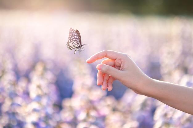 Mädchen befreit den schmetterling aus dem glas, goldblauer moment konzept der freiheit