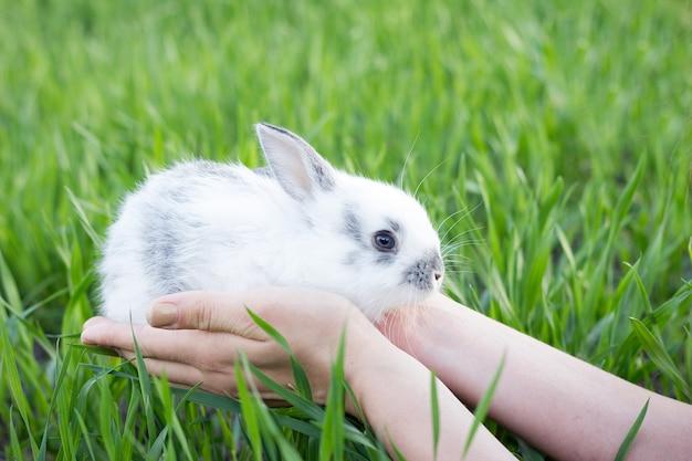 Mädchen, das ein kleines kaninchen auf einer grünen wiese hält.