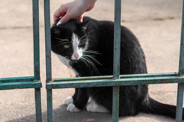 Mädchen, das eine katze schwarz und weiß streichelt. flauschige katze im park auf der straße