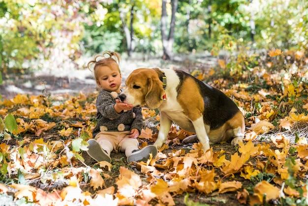 Mädchen, das mit dem spürhund spielt, der in den ahornblättern am wald sitzt