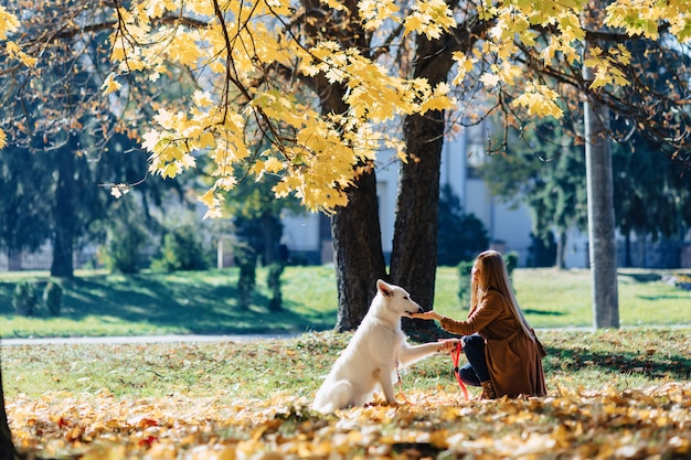 Mädchen geht am herbstpark mit jungem weißem schweizer schäferhund
