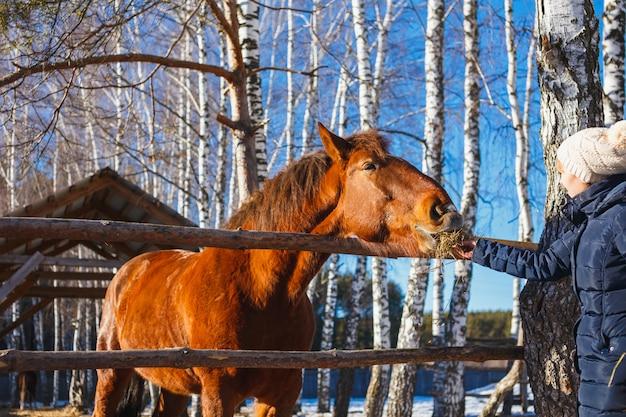 Mädchen gibt pferdheu mit ausgestreckten händen
