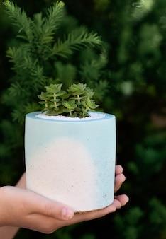 Mädchen hält eine saftige pflanze in dem keramischen blau-weißen blumentopf mit ihren händen