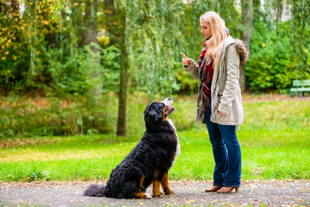 Mädchen im herbstpark, der ihren hund im gehorsam ausbildet