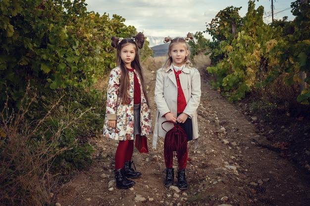 Mädchen im september, um weinberge zu ernten, sammeln die ausgewählten trauben in italien für die große ernte. biologische konzept-id, bio-lebensmittel und edler wein handgemacht