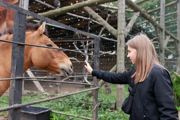 Pferd, kopf, landwirtschaft, pferde- | Kostenlose Foto
