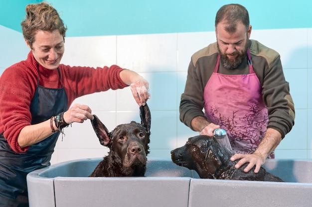 Mädchen spielt grimasse mit ihrem labrador retriever, während ihr junge seinen anderen hund badet. lustige familienmomente