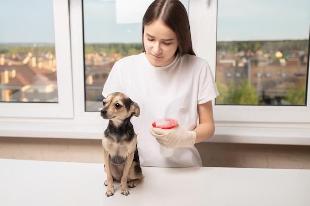 Mädchen sprüht einen hund aus einem floh- und zeckenspray