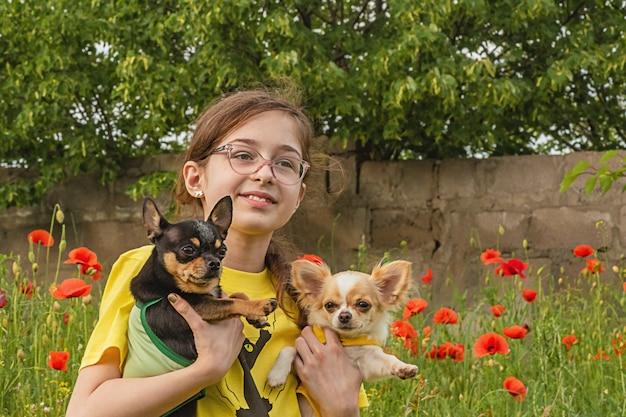 Mädchen und zwei chihuahuas in den armen im sommer im freien. teenager-mädchen auf einem mohnfeld.