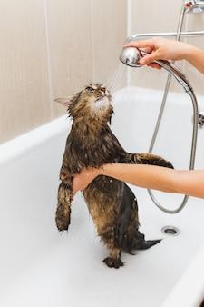 Mädchen wäscht eine flauschige katze in einem weißen bad