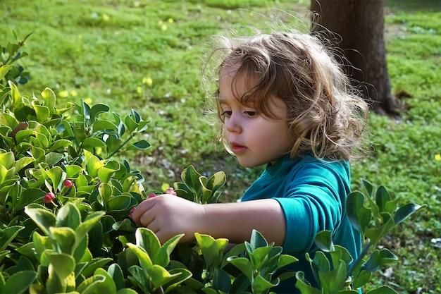 Mädchen zerreißt blumen von den büschen